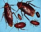 环保无毒 天津河西区灭蟑螂公司 杀蟑螂 除蟑杀虫公司