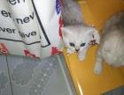 自己家的猫咪出售