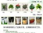 东莞园林景观设计施工养护,植物租摆,室内景观布置