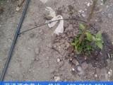 开封果树滴灌滴头如何连接16pe管