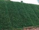 福建厦门哪里有做边坡绿化养护管理的公司