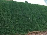 福建厦门有做边坡绿化养护管理的公司