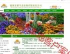 临洮网络网站超低价建设-官网制作