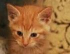 泰安自家健康可爱小猫找新家四种颜色,贰佰陆拾圆一只!