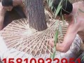 北京诚信修树伐树移树