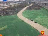 安平业勤供应工地盖土网厂家直销/盖土网厂家 环保防尘量大从优