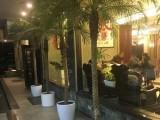 室内花卉租赁 绿植租赁