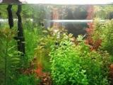 自来水养水下叶水草