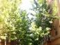 绿叶优选 恒茂城2室 新房 拎包入住