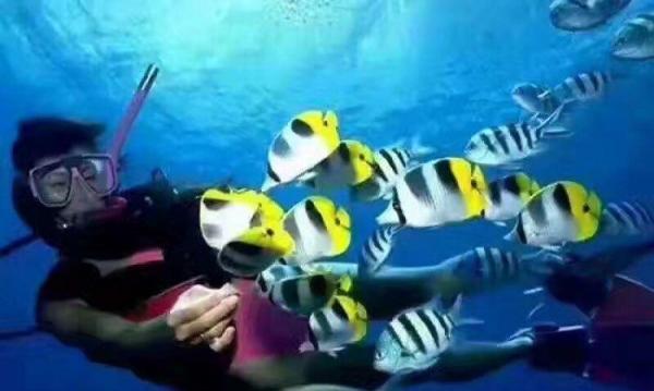 万里顺旅游服务平台推荐凤凰岛潜水俱乐部