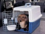 成都宠物托运保姆 全程专人护理宠物
