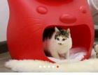 派寵Kitty Meow貓窩