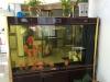 银龙鱼带鱼缸