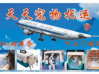 天天宠物托运专业代办飞机火车检疫,可提供上门接送服务