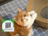 昆明哪里卖加菲猫 昆明哪里有宠物店 昆明哪里卖宠物猫便宜