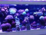 成都专业鱼缸鱼池清洗鱼缸造景鱼缸维修上门
