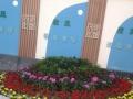植物盆栽时令草花年宵花商场公司家庭个体租摆零售批发