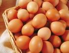 批发红、白、粉优质高峰蛋