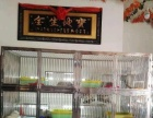 《鞍山春生名猫会馆》东北优秀种猫聚集地