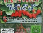 广西南宁壮家一号农家乐,采摘,烧烤,旅游的较好选择