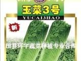 内销广东 湖南 上海 优质大白菜 专业种植大白菜