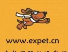 宠物出国宠物回国港澳台运输海外宠物代购