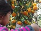 上海农家乐旅游推荐 采桔子摘草莓 喂山羊吃土菜 看海