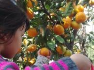 上海南汇农家乐 吃土菜游滴水湖 自助烧烤 采摘桔子猕猴桃