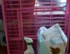 新买的狗笼,6片,适合养泰迪,小宠物!用了三天