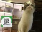 新乡哪里卖加菲猫便宜 新乡哪里卖加菲猫 新乡哪里买加菲猫