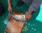 阿拉出海扩鱼吃野生海鲜象山港湾 奉化栖凤