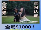 较大宠物养殖基地 销售总部 常年出售各种精品宠物幼犬