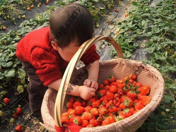 上海滴水湖农家乐推荐 采草莓吃土菜 烧烤垂钓 棋牌住宿