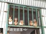 萌宠部落长期出售各类宠物松鼠