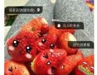 东钱湖草莓来袭,过分甜美,好吃的根本停不下来