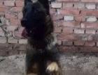 宠物训练价格1500