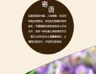 青海西宁淘宝天猫京东详情页制作、店铺装修、包装设计