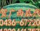 吉林 贺广 大安西瓜代办购销货站
