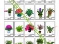 武汉专业绿植盆栽批发零售租摆,品种多价格优,可送货上门