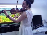 忻州学小提琴,忻州小提琴培训在哪里