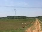 上饶鄱阳县2000亩荒田出租(450 元/亩/年)