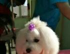 大连狗狗美容宠物美容师连锁加盟企业