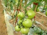 绑枝机好用不贵西红柿绑枝机绑蔓机西红柿冬瓜广西合浦县
