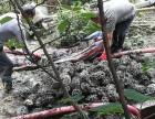 重庆管道清淤 涵洞清淤 化粪池清淤 河道清淤