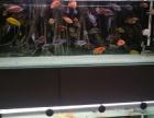 出售三湖鱼 鹦鹉鱼