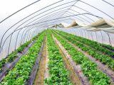 采摘园温室大棚供应商哪家好 承接采摘园温室大棚