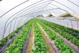 山东采摘园温室大棚价格|逸康温室工程供应实惠的采摘园温室大棚