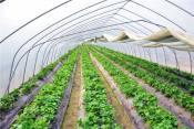 采摘园温室大棚造价|采摘园温室大棚厂家