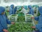 食品厂月薪4万,不是梦