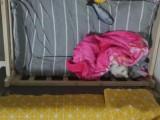 猫爬架 猫床,9成新低价紧急转让